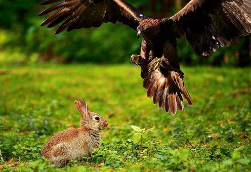 Adler, Bird Of Prey, Raptor, Bird