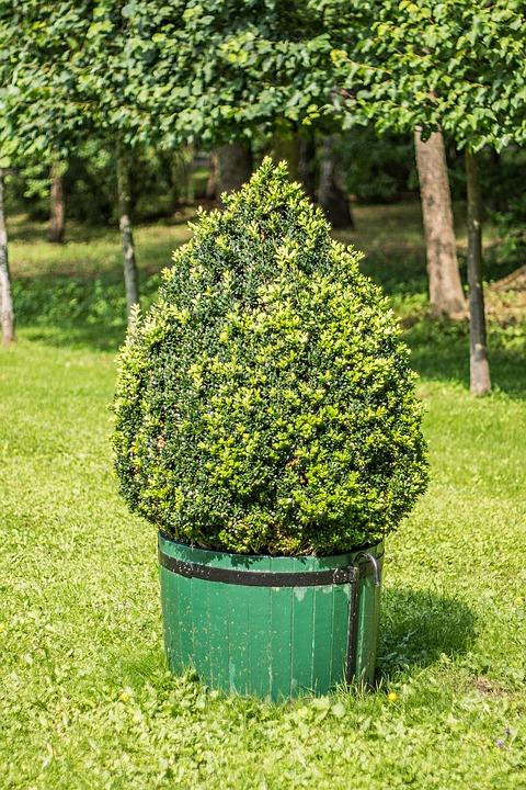 Superb Bush Park Plant Garden Tree Trees Summer