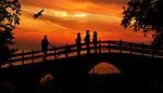 sunset, people, bird