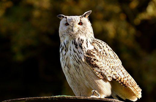 46+ Foto Gambar Burung Hantu Arsiran HD Terbaru Gratis
