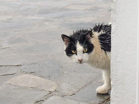 Katze, Abkommen, Nass, Regentag