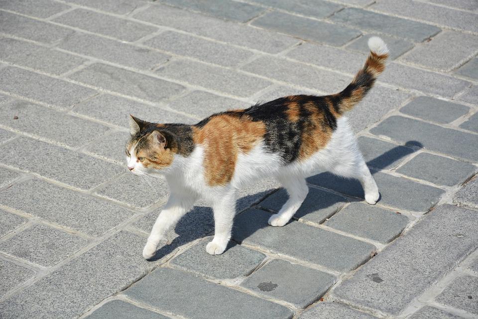 Cat, Istanbul, Sultanahmet