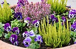 planting, flowers