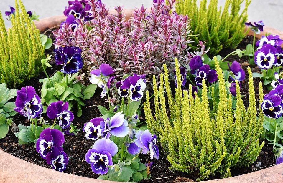 Bepflanzung, Blumen, Stiefmüttcherchen, Pflanzen, Grün