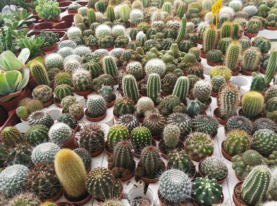 Foto gratis cactus vivero plantas verde imagen for Plantas de vivero