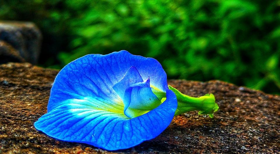 """Attēlu rezultāti vaicājumam """"dark blue and green flowers"""""""