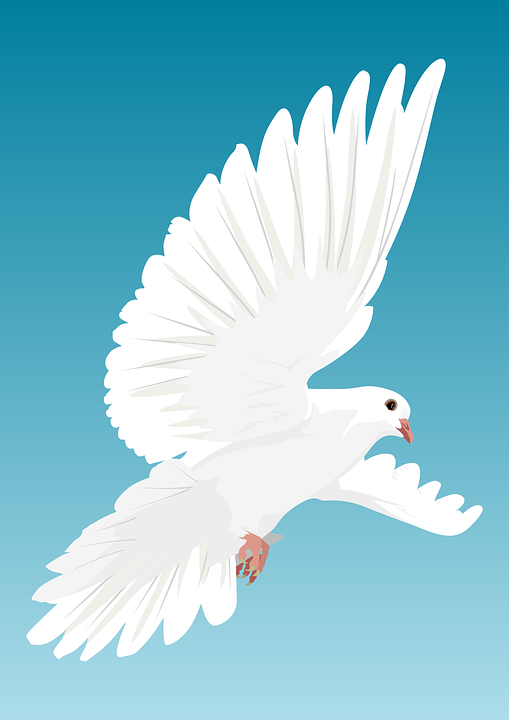 White Dove Free pictures on Pixabay