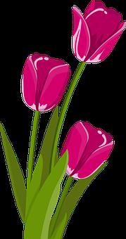 Цветок, Тюльпан, Весна, Tulpenbluete