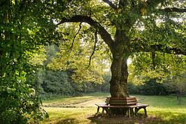 무료 사진: 벤치, 녹색, 공원 벤치, 나무, 자연, 휴지통, 평온 기초 ...