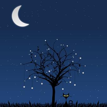 Lune, Arbre, Chat, Nuit, Star