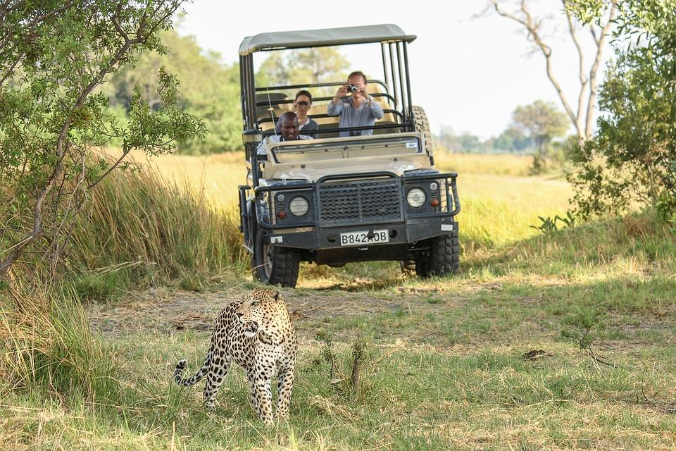 Léopard, Afrique, Botswana, Fauve, Safari, Gros Chat