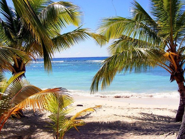 Palm Trees On The Beach: Beach Palm Tree Dominika · Free Photo On Pixabay