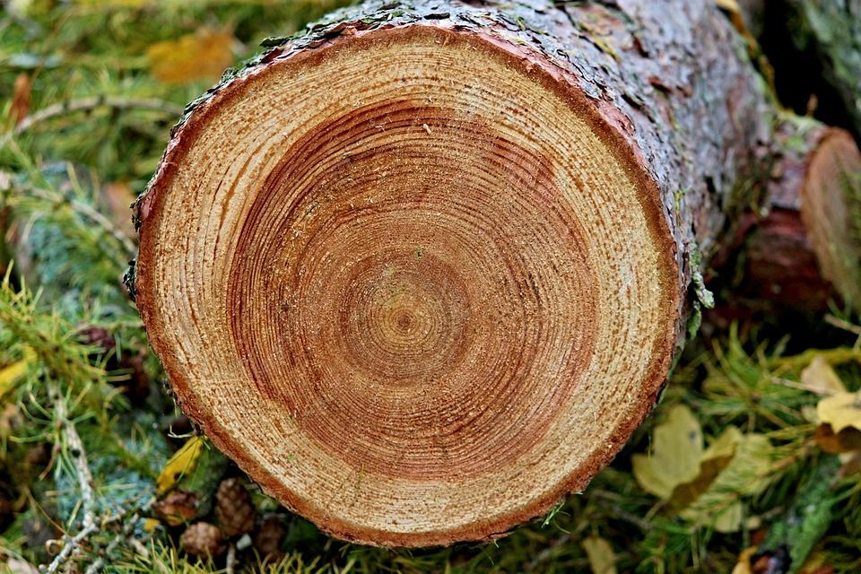 Dendrochronologie - Inele de copac ca înregistrări ale schimbărilor climatice