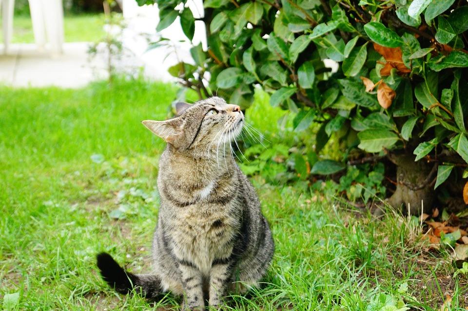 nafúknuté mačička rúrky