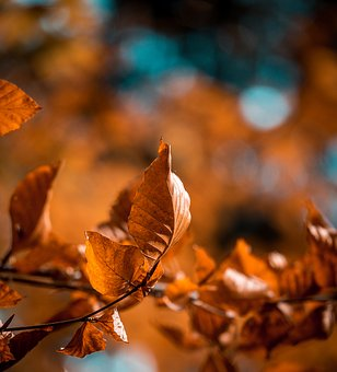 Leaves, Leaf, Forest, Autumn, Bokeh