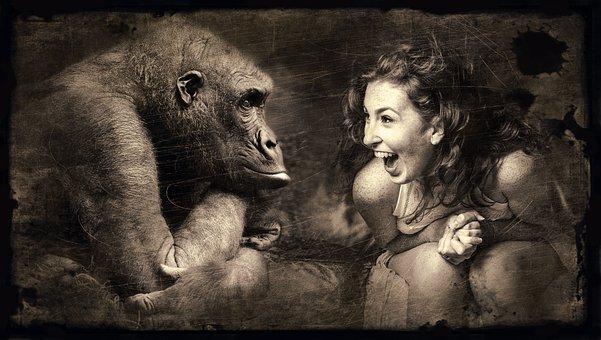 Composing, Monkey, Woman, Laugh