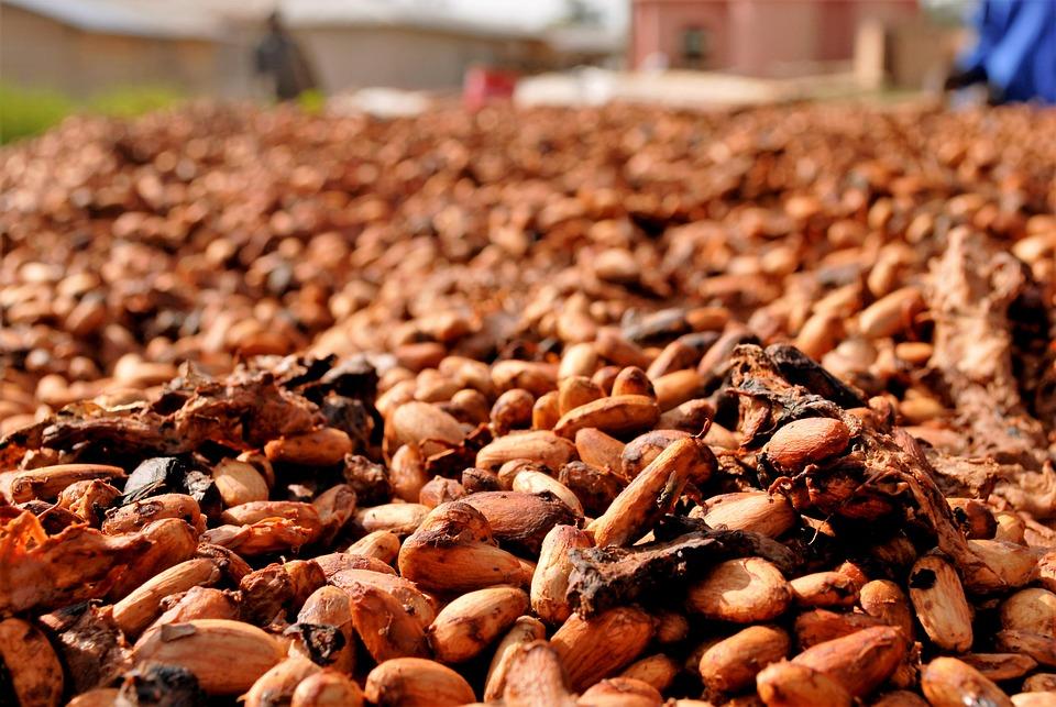 Kamerun merupakan salah satu produsen coklat terbesar di dunia