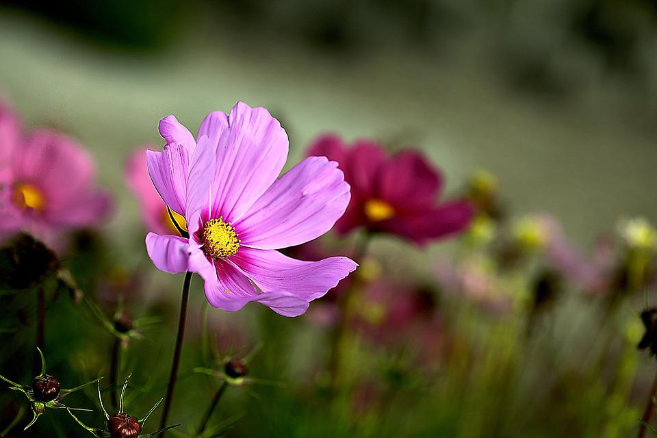 garden flowers space ontek small flowers