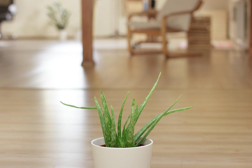 Aloe, Plant, Office, Green, Leaf, Vera, Herb, Medicine