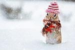 winter, chipmunk, knit hat
