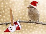christmas, greeting card