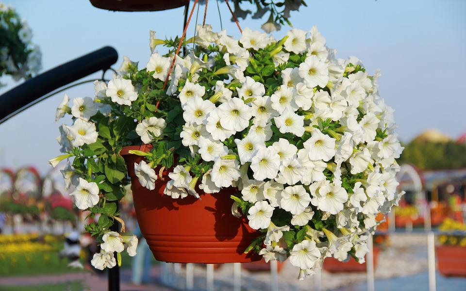 White Flower Garden Green · Free photo on Pixabay