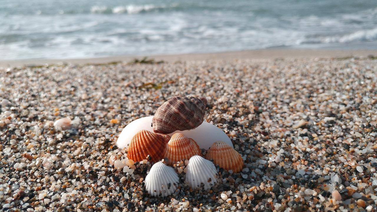 прекрасный черное море ракушечный пляж фото помощью редакторов программы