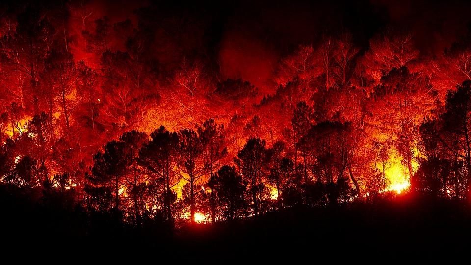 forest-fires-2930096_960_720.jpg