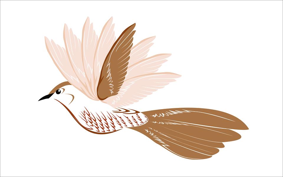 Dessin Oiseau Mouche oiseau mouche la faune · images vectorielles gratuites sur pixabay