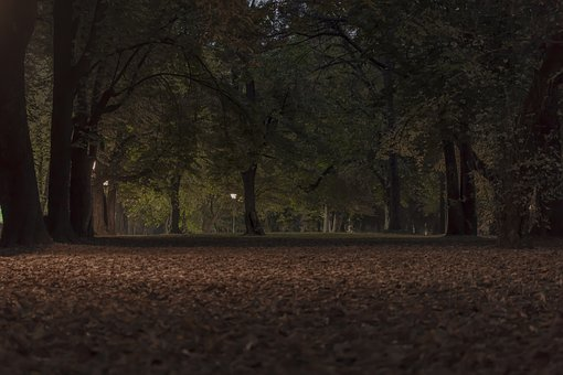 Park, Evening, Nature, Park In The City