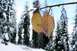 winter, snow, nature
