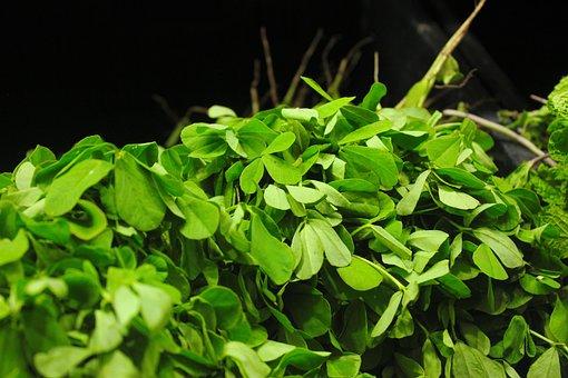 Fenugreek, Methi, Fresh, Green, Indian