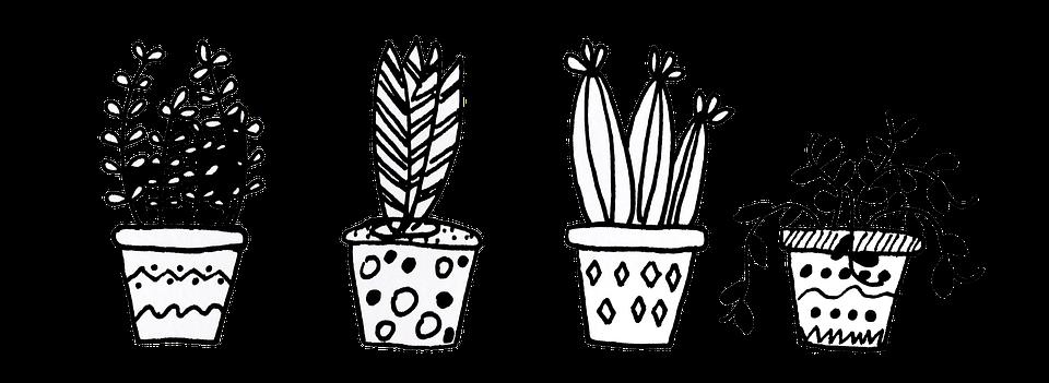 plants flowerpot cacti  u00b7 free image on pixabay
