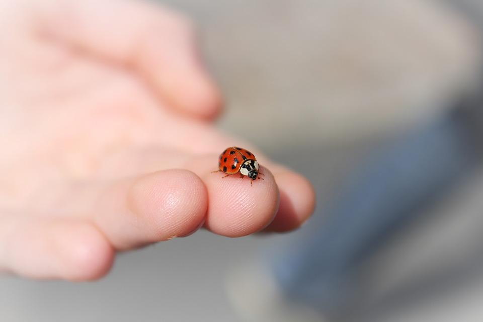 https://cdn.pixabay.com/photo/2017/11/09/13/30/ladybug-2933560_960_720.jpg