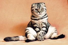 Cat, Kitten, Pets, Animals