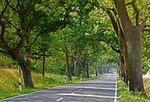 avenue, road