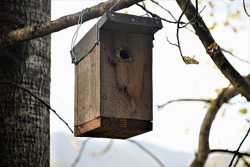 Nesting Box, Wood, Bat Nest Box