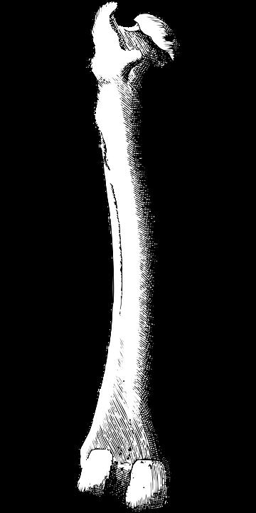 Knochen Bein · Kostenlose Vektorgrafik auf Pixabay
