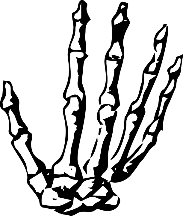 Hand Skeleton · Free vector graphic on Pixabay