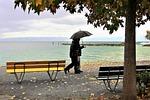 umbrella, rain, autumn