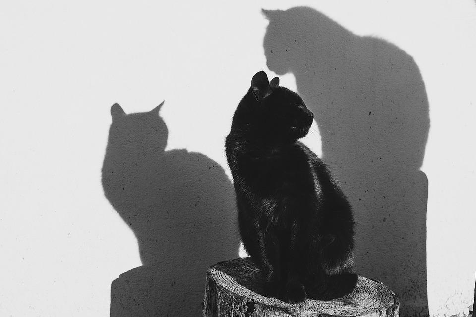 biela dievča sať čierna mačička rozbit mačička porno