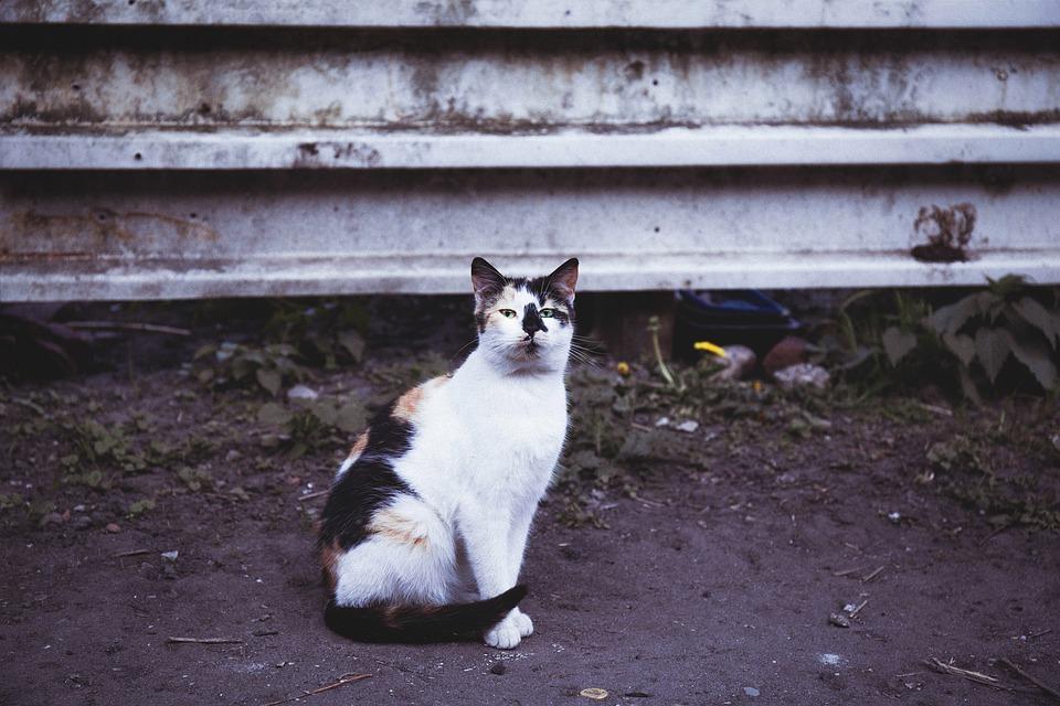 čierna mačička pics a vids