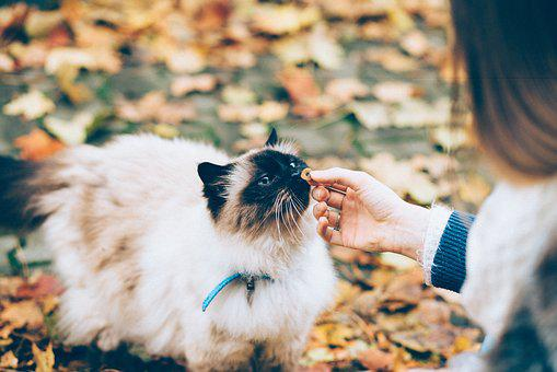 grooming long-haired cats with mats