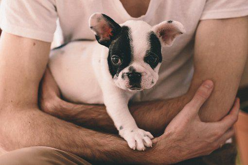 Animals, People, Adorable, Arms, french bulldog