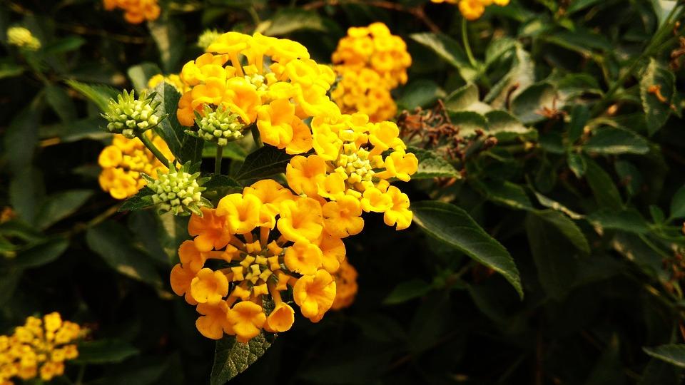 Yellow flowers green dark free photo on pixabay yellow flowers green dark green mightylinksfo
