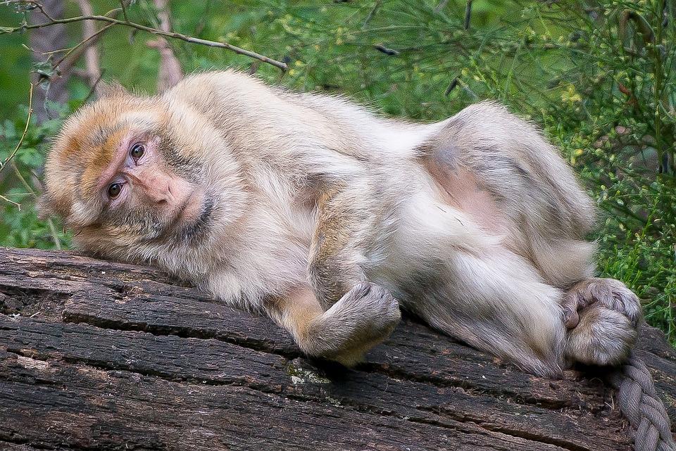 92+ Jenis Gambar Monyet Sedih Terbaik