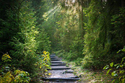 Forest, Away, Forest Path, Path, Trees