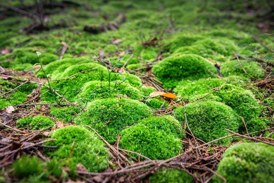 nature mousse