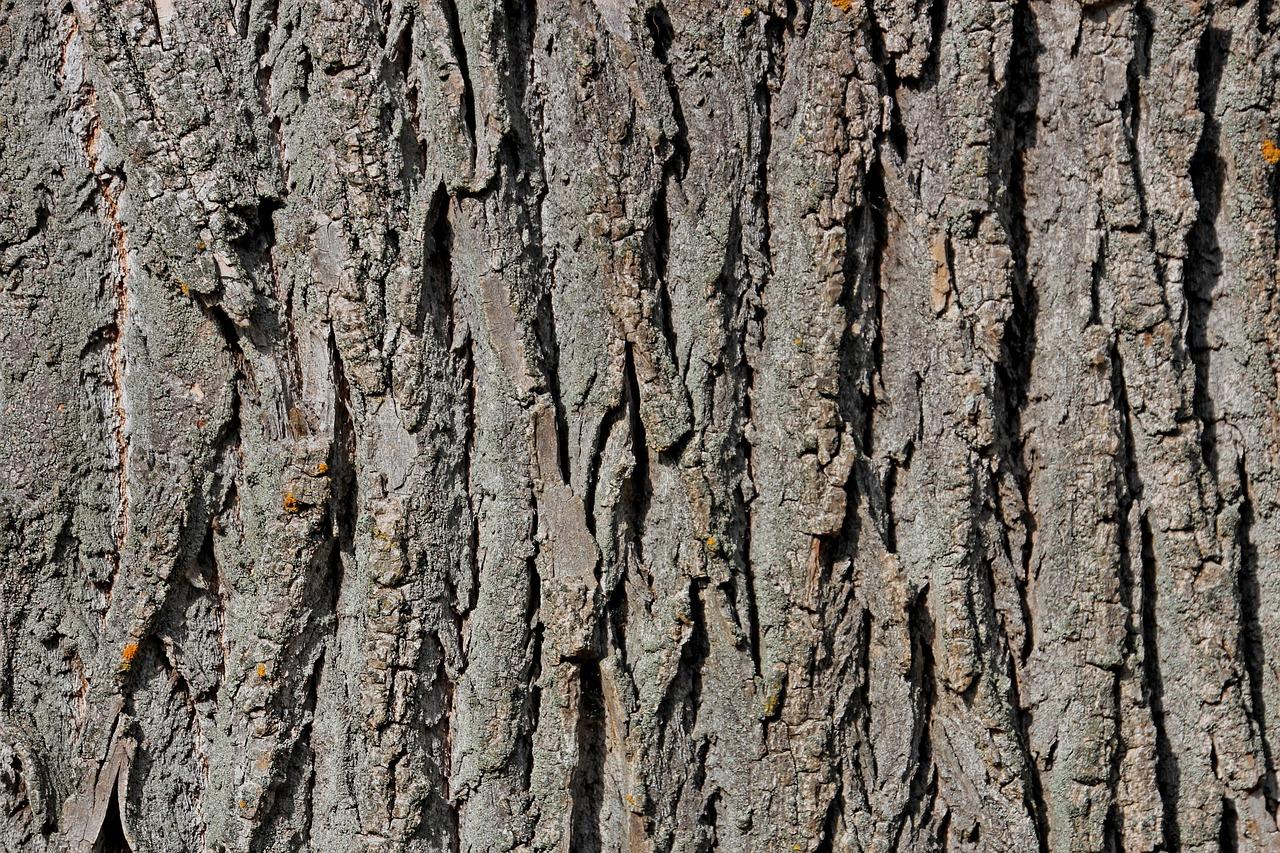 картинка кора деревьев на прозрачном фоне удивительно