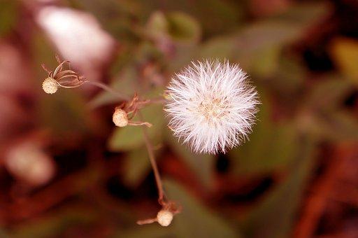 Emoção, Flores Silvestres, Branco